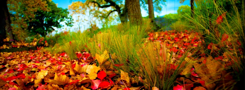 https://dosenea.files.wordpress.com/2014/10/autumn-leaves-and-fall-colors-wallpaper-for-facebook-covers-2368-44.jpg?w=851