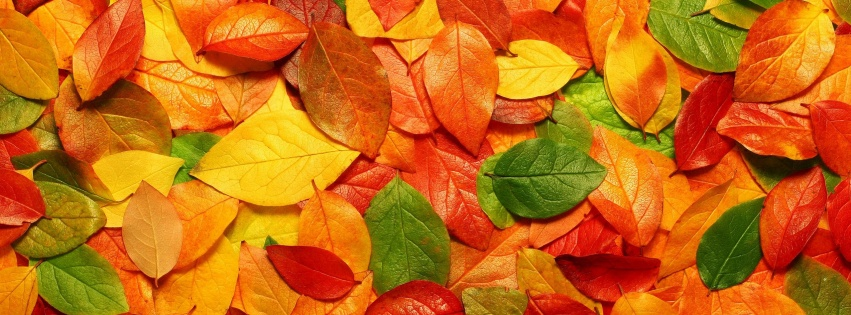 https://dosenea.files.wordpress.com/2014/10/autumn-leaves-background-851x315.jpg?w=851