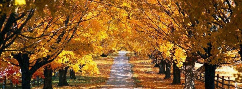 https://dosenea.files.wordpress.com/2014/10/autumn-road.jpg?w=851
