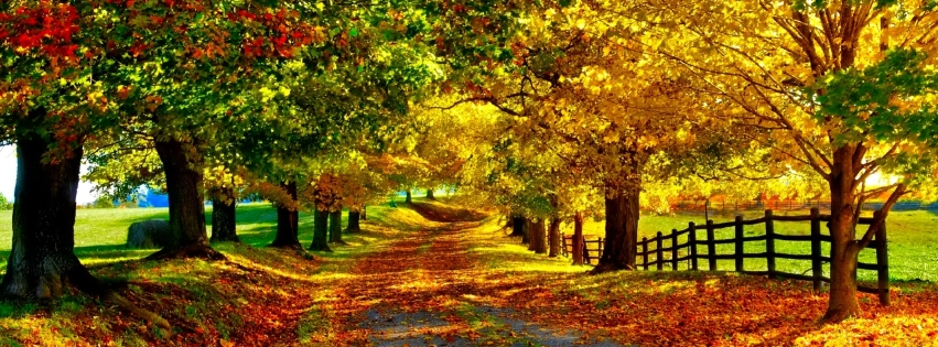 https://dosenea.files.wordpress.com/2014/10/autumn-road1.jpg?w=851