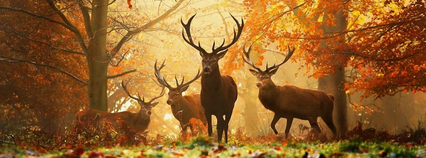 https://dosenea.files.wordpress.com/2014/10/deers-autumn-851x315.jpg?w=851
