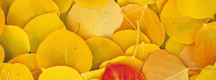 https://dosenea.files.wordpress.com/2014/10/facebook_cover_photo_autumn_leaves_-851x315.jpg?w=851