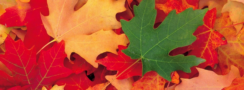 https://dosenea.files.wordpress.com/2014/10/facebook_cover_photo_autumn_mixe_-851x315.jpg?w=851