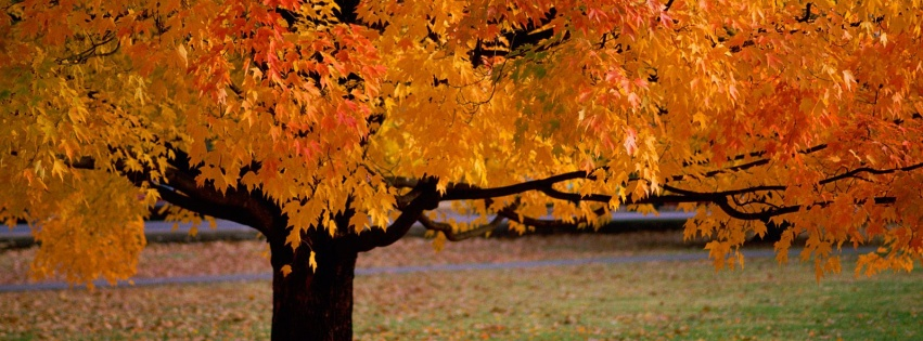 https://dosenea.files.wordpress.com/2014/10/facebook_cover_photo_autumn_park-851x315.jpg?w=851