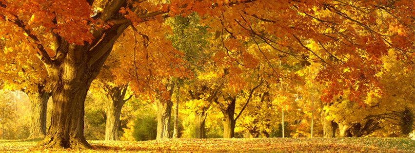 https://dosenea.files.wordpress.com/2014/10/fall-leaves-autumn-facebook-timeline-cover.png?w=851