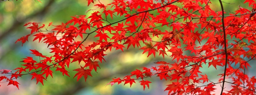 https://dosenea.files.wordpress.com/2014/10/nature-trees-autumn-315x851.jpg?w=851